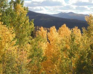 The hills are alive with the flaming yellow, orange, and red of Aspen trees. New every year even if you have seen it every year before.