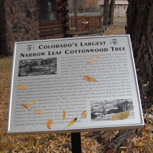 Placard for the largest narrow leaf Cottonwood Tree in Colorado.