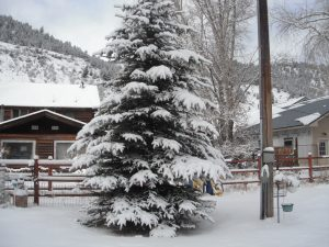 This is a best Christmas tree with nature's decorations.
